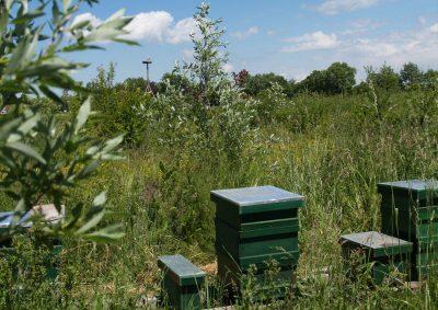 agroforestry bijen