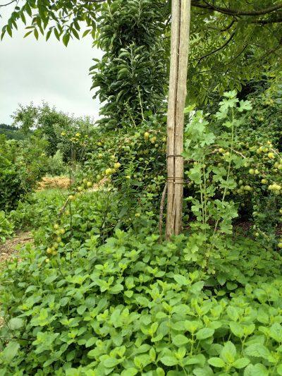 natuurlijke landbouw Le Bec Hellouin