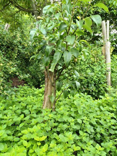 agroforestry lagen in de bosrand
