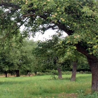 agroforestry bosweide